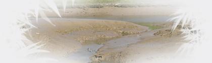 Cotone ing nierie bureau d 39 tudes en eau for Bureau etude eau environnement